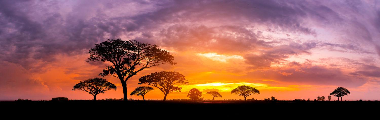 Fundacja : Nowe Drzewo Życia